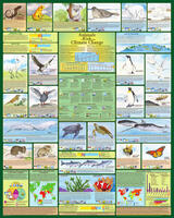 Animals at Risk from Climate Change  - Laminated Poster
