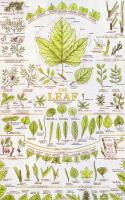 The Leaf - Poster