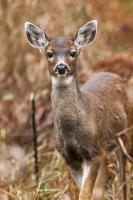 Being Seen by a Deer Photo Greeting Card