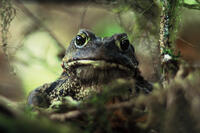Wise Toad -