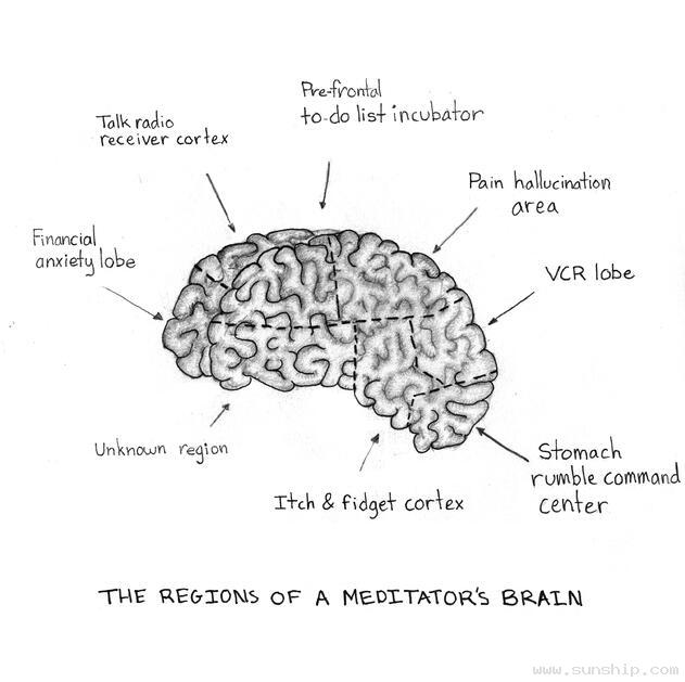The Regions of a Meditator's Brain