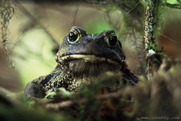 Wise Toad